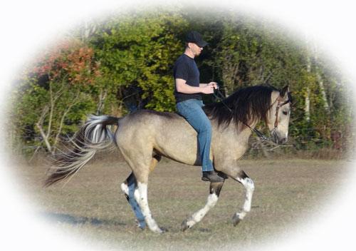 Tennessee Walking Horses Cloud 9 Walkers Tennessee Walking